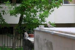кот напольный Стоковые Фотографии RF