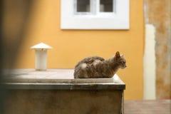 кот напольный Стоковая Фотография RF