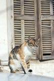 кот напольный Стоковые Фото