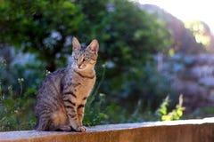 кот напольный Стоковое Фото