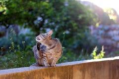 кот напольный Стоковая Фотография