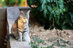 кот напольный Стоковое фото RF