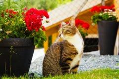 Кот наслаждаясь внешнее Стоковое Изображение RF