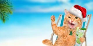 Кот наслаждаясь сидеть коктеиля ослабляя на deckchair в предпосылке моря Стоковые Изображения