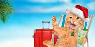 Кот наслаждаясь сидеть коктеиля ослабляя на deckchair в предпосылке моря Стоковые Изображения RF