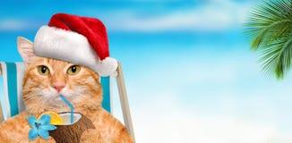 Кот наслаждаясь сидеть коктеиля ослабляя на deckchair в предпосылке моря Стоковое фото RF