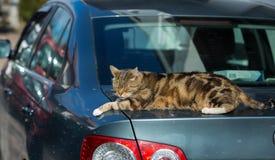 Кот на автомобиле стоковая фотография