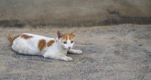 Кот на бетоне Стоковые Изображения RF
