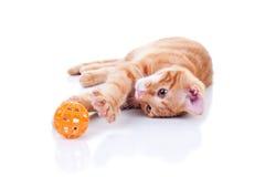 Кот на белизне Стоковое Изображение