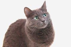 Кот на белой предпосылке Стоковые Изображения