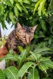 Кот на вале Стоковое фото RF