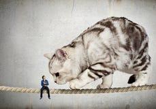 Кот на веревочке Мультимедиа Стоковое Изображение