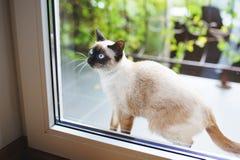 Кот на двери балкона Стоковое Изображение