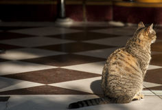 Кот на двери магазина хлебопекарни Стоковые Фотографии RF