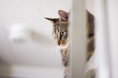 Кот на двери 2 Стоковые Изображения RF