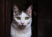 Кот на двери Стоковые Фото