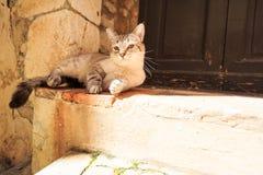 Кот на двери Стоковые Фотографии RF