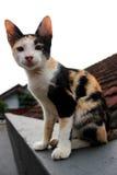 Кот на верхней части крыши стоковая фотография
