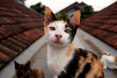Кот на верхней части крыши стоковое фото