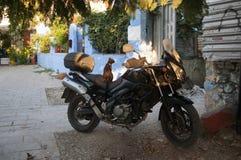 Кот на велосипеде, Родосе, Греции Стоковое Изображение RF