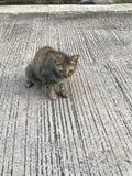 Кот на дороге стоковые фотографии rf