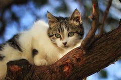 Кот на дереве Стоковые Фотографии RF