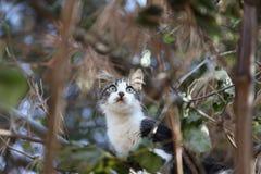Кот на дереве Стоковая Фотография