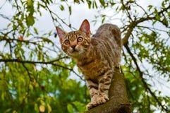 Кот на дереве стоковое изображение