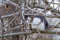 Кот на дереве Стоковые Изображения RF