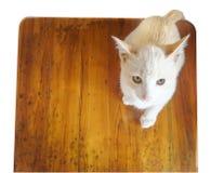 Кот на деревянной таблице, оно смотря к мне Стоковое Изображение RF