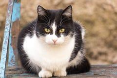 Кот на деревянном банке Стоковое Фото