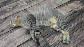 Кот на деревянном поле Стоковое Изображение