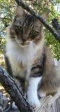 Кот на деревянном рельсе Стоковое Изображение