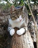 Кот на журнале Стоковые Изображения