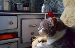 Кот на зиме Стоковая Фотография