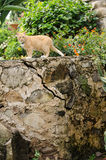 Кот на каменной стене Стоковое фото RF