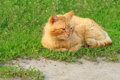 Кот на каникулах стоковое фото rf