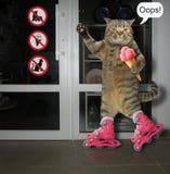 Кот на коньках ролика стоковое фото