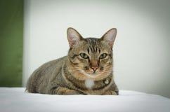 Кот на кровати с предпосылкой нерезкости стоковые фотографии rf