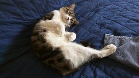 Кот на кровати Стоковое фото RF