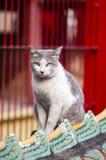 Кот на крыше Стоковое Изображение RF
