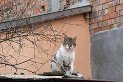 Кот на крыше Стоковые Фото