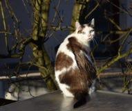 Кот на крыше стоковая фотография rf