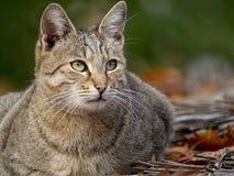 Кот на крыше Стоковое фото RF