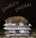 Кот на куче подушек стоковые изображения rf
