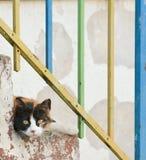 Кот на лестницах Стоковые Изображения RF