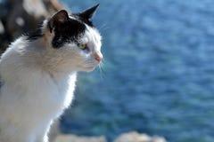 Кот на море Стоковое Фото