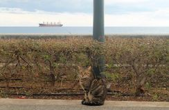 Кот на набережной Лимасола стоковое фото rf