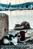Кот на набережной стоковое фото rf