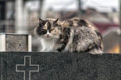 Кот на надгробной плите Стоковое Изображение RF